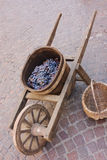 Old wheelbarrow with grape Stock Image