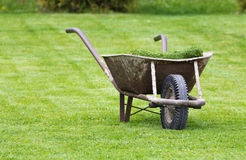Old wheelbarrow on a lawn with fresh grass clippings in summer.  Stock Photos