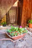 Old wheelbarrow planter in front of an old wooden door royalty free stock photography