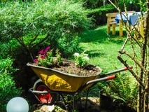 Old wheelbarrow used as flower pot. stock photo