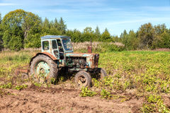 Old wheeled agricultural tractor used at the potato field. In summer Stock Photo