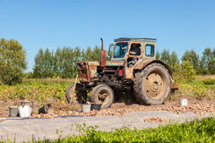 Old wheeled tractor working at the potato field in summer sunny Stock Images