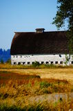 Old white barn. A old white barn stands strong after many years of use Royalty Free Stock Image