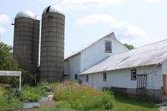 Old white barns and silos. Old white barn building with abandoned silos Stock Photos
