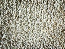 Old white carpet Stock Image