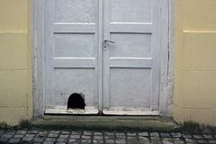 Old white dirty wooden front door. With a cat`s hole Stock Photography