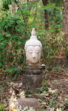 Old white head of buddha in forest Royalty Free Stock Photo