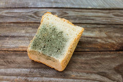 Old white mold on bread. Stock Image