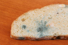 The old white mold on the bread. Spoiled food. Mold on food. Stock Image