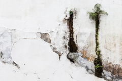 Old white wall with amazing unwanted flora royalty free stock photos