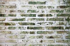 Old white wall has moss in the brick. Because of humid weather Stock Image