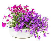 Old white washbowl with carnation and bellflowers. Stock Images