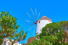 Windmill and olive trees in Mykonos royalty free stock photography