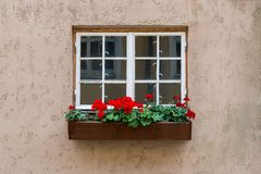 Old white wood window with flower box on the concrete background Royalty Free Stock Photo