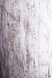 Old white wooden board background, empty copy space Stock Image
