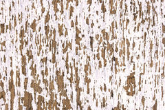 Old white wooden texture royalty free stock images