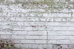 The old whitewashed brick wall Stock Images