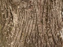 Old Bark Texture. Old wihtered Bark Texture High Resolution royalty free stock photo