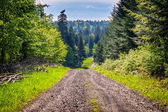 Free Old Wild Forest Road Landscape Royalty Free Stock Photo - 84900945