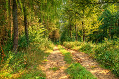 Free Old Wild Forest Road Landscape Royalty Free Stock Images - 84901499
