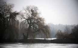 An old willow on the shore of a winter pond. stock images