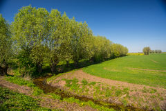 Old willow trees. Near a canal in the area of Zulawy Wislane in northern Poland royalty free stock images