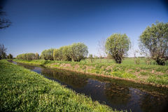 Old willows near a canal in summer Royalty Free Stock Photography