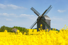 Old windmill in a field of rapeseed Stock Photos