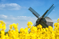 Old windmill in a field of rapeseed Stock Images
