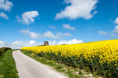 Old windmill. In rapeseed field Stock Image