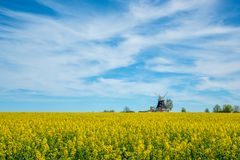 old windmill stands on a canola field stock photo
