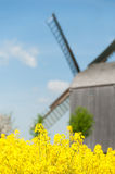 Old windmill surrounded by fields of rapeseeds Royalty Free Stock Photography