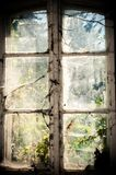 Old window. With spider webs Royalty Free Stock Images