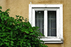Old window. Wall, old window with rugged frame and grapevine Stock Images