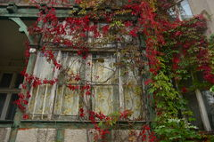 Old window with autumn leaves. Old wooden and destroyed window and red or green autumn leaves in Gdansk-Oliwa, Poland Royalty Free Stock Images