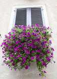 Old window with closed shutters with flowers on the window sill on the stone wall. Italian Village Royalty Free Stock Photos