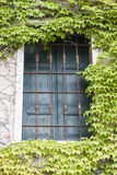 Old window with closed shutters on the window sill with ivy on the the stone wall. Italian Village Stock Photo