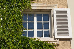 Old window with creeper. Royalty Free Stock Photos