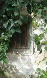Old window with creeping plant. Old Greek wooden window.  Painted white, with bars and chicken wire. Old white stone wall. Creeping plant.  Fodele. Crete Royalty Free Stock Photo