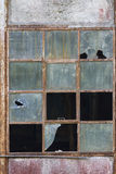 Old Window Destroyed And Abandoned Royalty Free Stock Photography