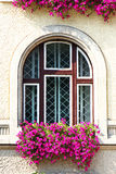 Old window detail. Detailed old window frame with flowers Royalty Free Stock Photo