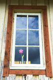 Old window with flower. An old window with a pink artificial flower Royalty Free Stock Photography