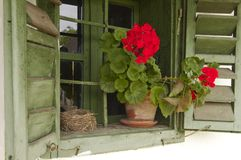 Old window with flower and bird cavity Royalty Free Stock Photos