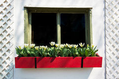 Old Window Flower Box. An old window of a house with a flower box of tulips Royalty Free Stock Image