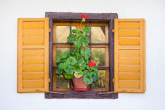 Old window with flower Royalty Free Stock Image