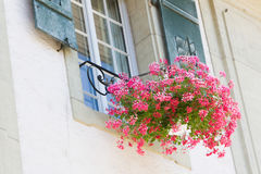 Old window and flowers at a historic building Stock Photography