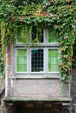 Overgrown old window Stock Images