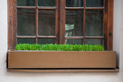 Old window with grass in box Royalty Free Stock Photography