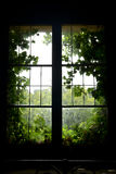 Old window with green leaves Royalty Free Stock Photos