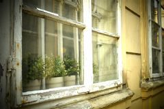 Old window. Green plants in the old white window Royalty Free Stock Photos